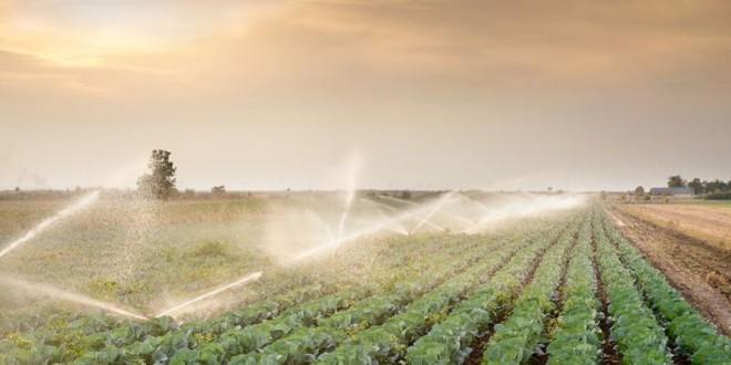 Si riuniscono in assemblea gli agricoltori sul piede di guerra per il costo dell'acqua