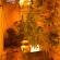 Mola di Bari, arrestato dai Carabinieri un restauratore che nello scantinato aveva allestito una piantagione di marijuana
