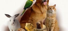 Approvato all'unanimità il regolamento per gli animali d'affezione