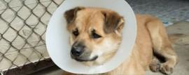 cane-ferito-1024x536