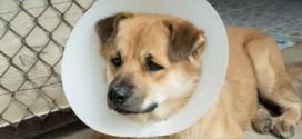 Pronto soccorso veterinario per cani e gatti feriti sul territorio comunale
