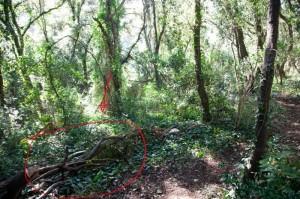 Il tratto sul quale sono stati tagliati alberi e arbusti per consentire la creazione di una vera e propria pista per cross-bike e moto-bike