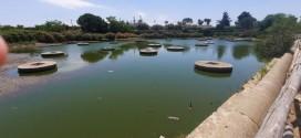 Lago di Sassano, grossi pesci morti galleggiano nelle acque putride