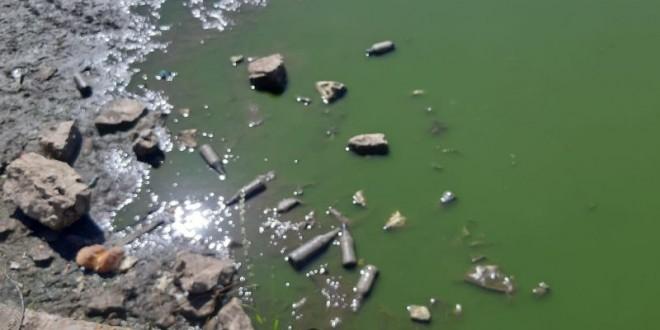 Strage di animali nel Lago di Sassano, urgentissimo un intervento senza alcun rinvio